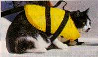 cat in life jacket